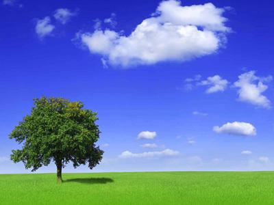 Umwelt schätzen